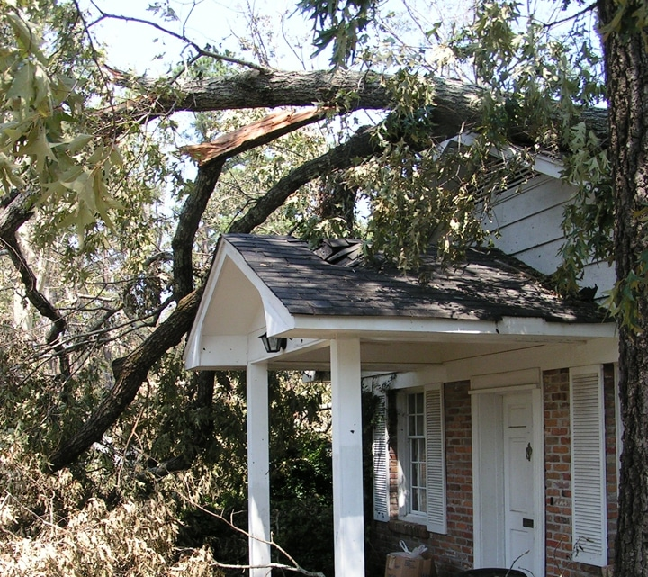 House Tree Damage